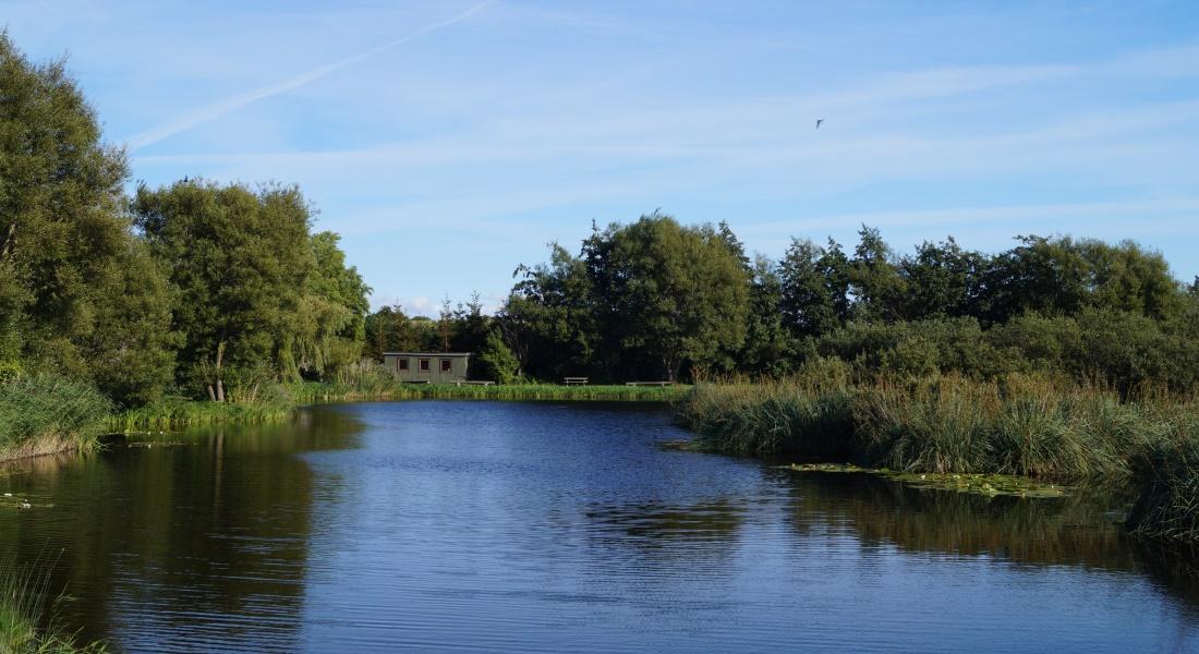 Blå himmel over fiskesøen